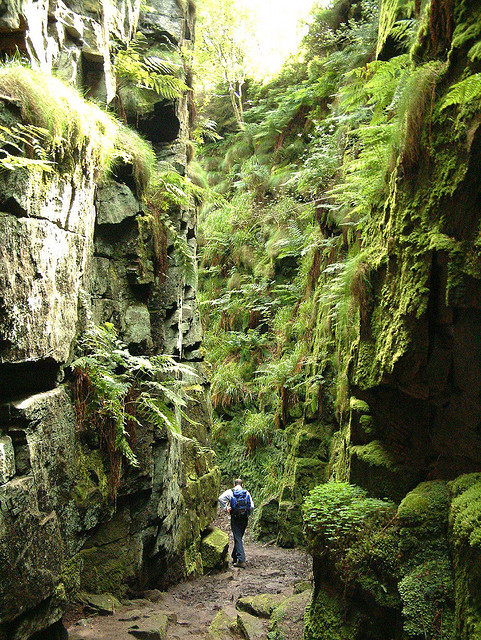 visitheworld:  Hiking in Lud's Church, a deep chasm in Staffordshire, England. Robin Hood, Friar Tuck and Bonny Prince Charlie are all reputed to have hidden from the authorities within the chasm (by topdogdjstew).  From Wikipedia:  It is believed that the chasm was considered by early Pagans to be a sacred place, most likely due to the phenomenon that occurs on Midsummer Day, where only on this day does the sun's light penetrate deep into the chasm.Lud, known as Nud in Welsh, or Nodens by the ancient Britons, is a major Celtic deity associated with many parts of Britain and with the Arthurian Fisher King and, by way of Sir Gawain and the Green Knight, the Green Man. The area also has a place in Christian history: the Lollards, who were followers of John Wycliffe, an early church reformer, are supposed to have used this as a secret place of worship during the early 15th century, when they were being persecuted for their religious beliefs. Lud's Church may have been named after Walter de Ludank or Walter de Lud-Auk who was captured here at one of their meetings.