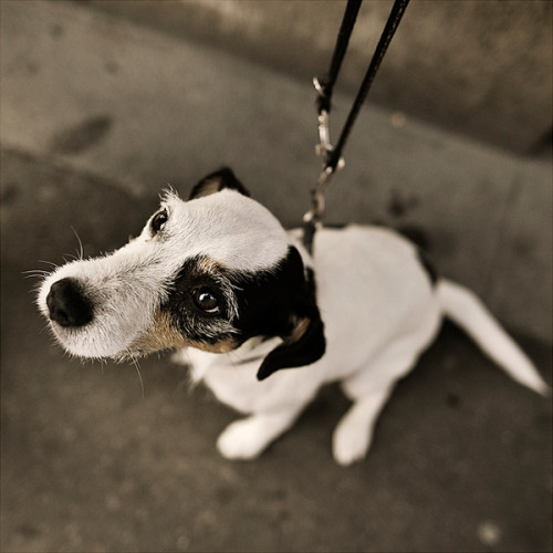 Dog stories I From photographer Nils Holgersson.View Postshared via WordPress.com