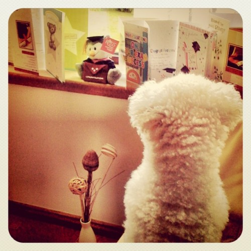 day 218: reading the cards #cleverdog :) (Taken with Instagram)