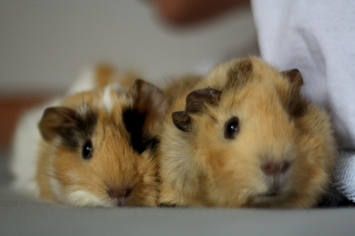piggiepoops:  handsome fellas