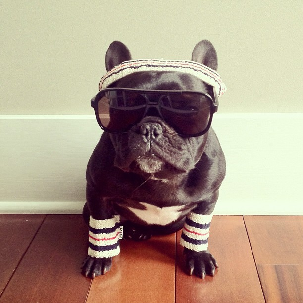 "npr:  thefluffingtonpost:  Meet Trotter, the Most Fashionable Pup on Instagram Mobile photo network Instagram is known for fashion photos and pet pics, but the best of both worlds are married by Trotter, a San Francisco Frenchie who knows how to step out in style. She prefers to work with only one photographer, Sonya Yu. ""Sonya really captures Trotter's essence,"" says Randy Zed, the pup's longtime publicist. ""When it comes to high dog fashion, there's really no one else on the scene today."" Via Sonya Yu.  Treat yourself! — tanya  b.   THE MOST ADORABLE"