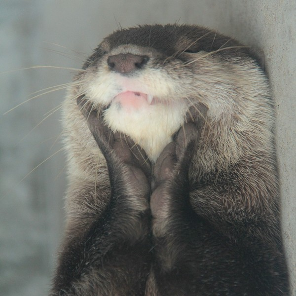 dailyotter:   Delighted Otter Is Delighted Via Beginners' Blog Otter