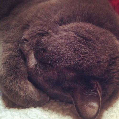 Sweet kitty face.  #cattweets (Taken with Instagram)