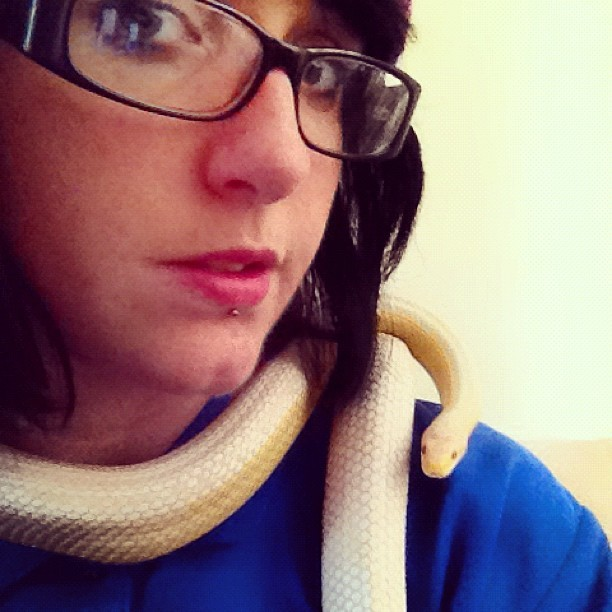 llamachops:  I look funny but my snake is cute. #snake #corn #cornsnake #girl #glasses (Taken with Instagram)  D'awwwww! Is she leucistic?