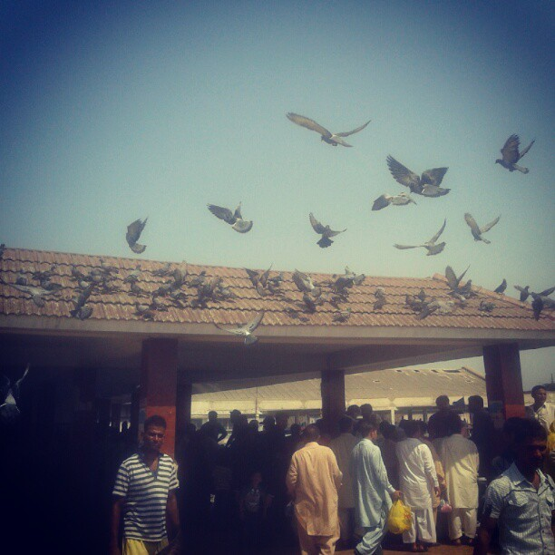 Kemari Jetty #karachi #birds #pigeon #fly (Taken with Instagram at Kemari Jetty)