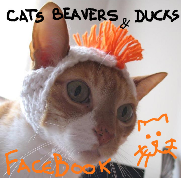 Cats, Beavers & Ducks on Facebook