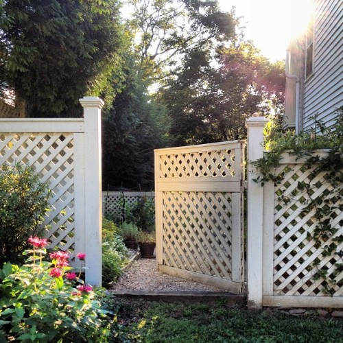 The last rays of the #sun illuminate our #Connecticut #summer #garden (Taken with Instagram)