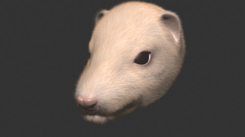 Update for the Ferret. Looking much better just need to fix up the ears a bit more and tweak some things. I've been working on wet fur too. A bit more difficult than I expected but It's coming  along. Will post more updates soon. :)