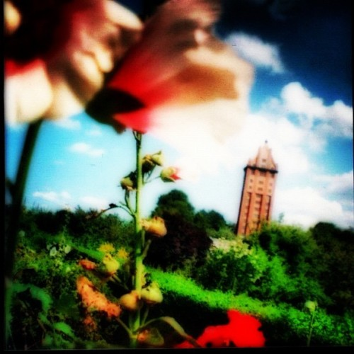 #flowers #sky #summer #colours #analog #lomo #park #nature #life #beauty (Wurde mit Instagram aufgenommen)