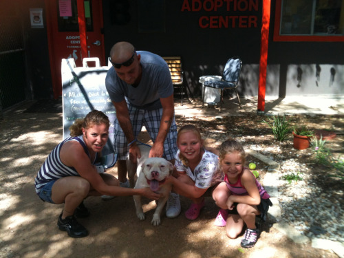 slackmistress:  yayponies:  hardluckhounds:  Yeti goes home! His adopters are pit bull enthusiasts with two adorable little girls ages 6 and 8. Thanks for all the notes and followers!! I will be posting more dogs later.  omg Yeti!!!! :')  HEARTS.  A good dog, gets a good home. Go find a rescue dog and take them home.