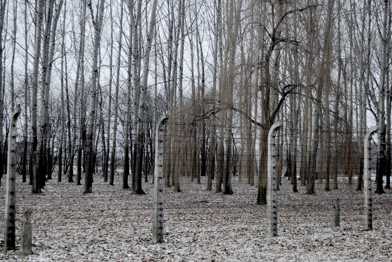 Auschwitz Birkenau - Trees and Wire Fence February 2011 Benedict Stewardson