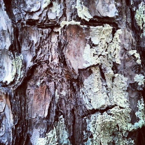 #tree #bark #abstract #abstracted #abstraction  (Taken with Instagram at Brahan Spring Park)