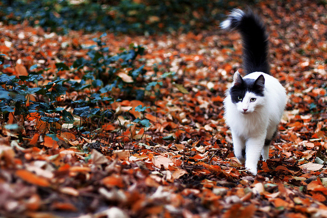 catp0rn:  I love autumn kitties