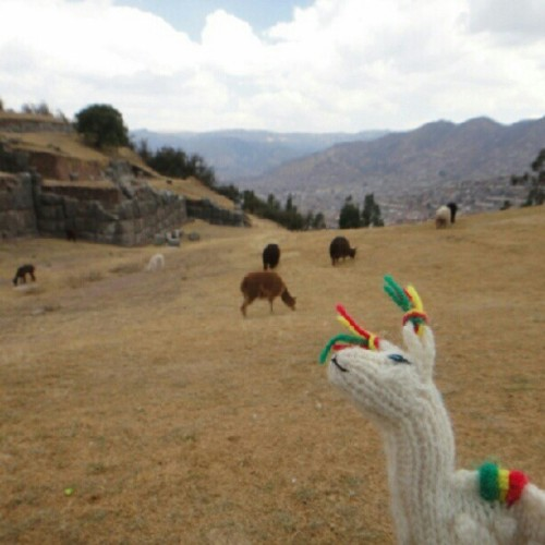 cmonstah:  Chillin' with the herd. (Taken with Instagram at Sacsaywaman)