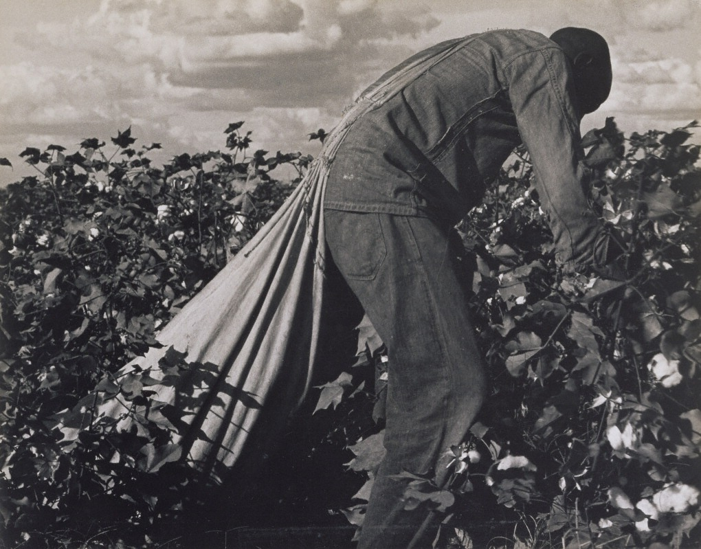 Stoop Labor in Cotton Field, San Joaquin Valley, California, 1938, Dorothea Lange. The J. Paul Getty Museum