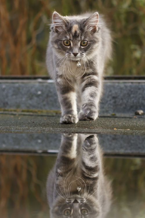 "magicalnaturetour:  Photo ""Cat on a Hot Tin Roof II"" by Roeselien Raimond ~ Happy Labor Day/Monday lovely friends :)"