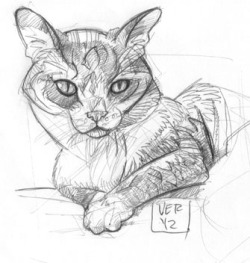 sketch of my cat