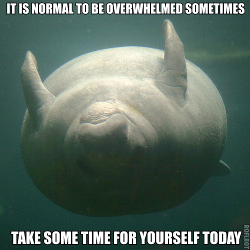 "calmingmanatee:  [Image description: A manatee is swimming upside down, looking at the camera. It must be sunny out, because its belly is lit up. The water looks like it is dark green, and there are spots in the photo. TEXT: ""It is normal to be overwhelmed sometimes. Take some time for yourself today.""]"