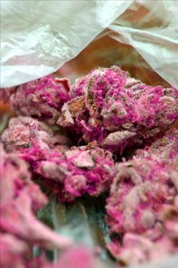 love-washington:  pink weed.. wanna say strawberry kush