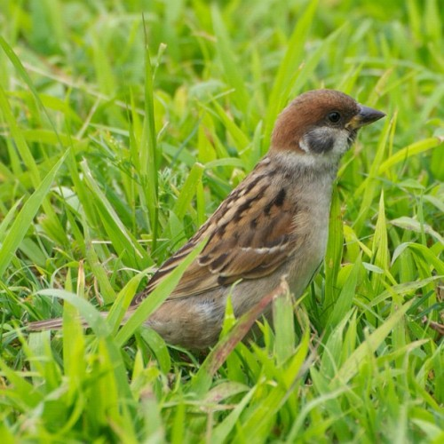 Sparrow stretch #japan #tokyo #bird #birds #Sparrow (Instagramで撮影)