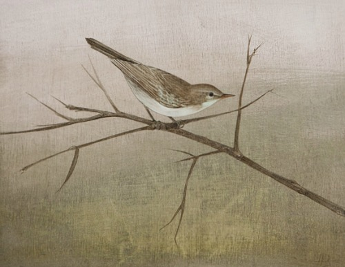 stilllifequickheart:  Harriet Bane Willow Warbler 2012