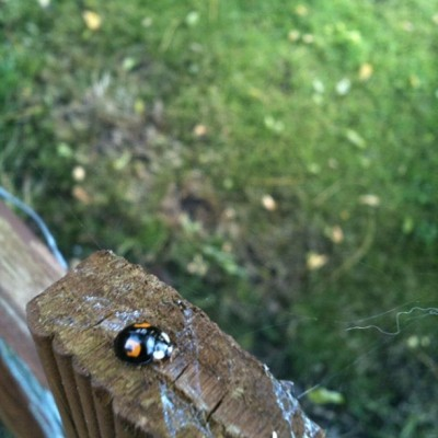 Unedited #ladybird #nature #focus #cute #pretty #photography  (Taken with Instagram)