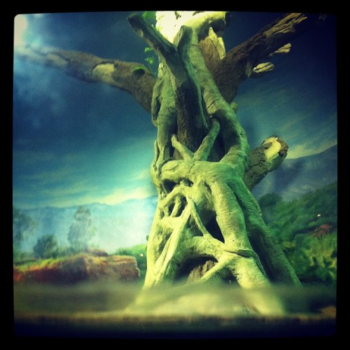 zoo set design  (Taken with Instagram)
