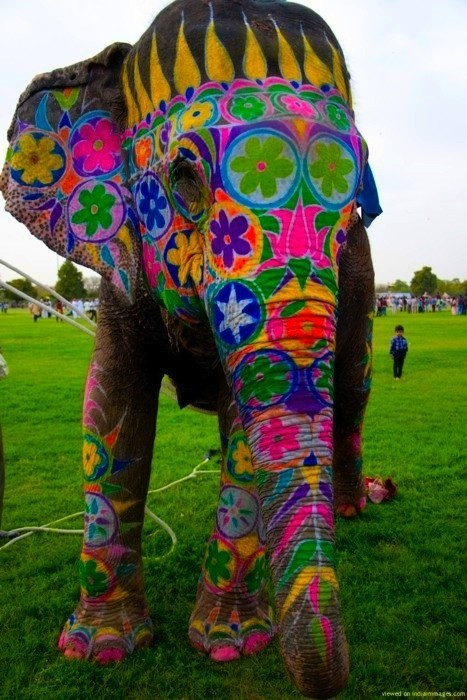 ravesquirrel:  Everybody Needs Their Very Own Rave Elephant  We couldn't agree more.