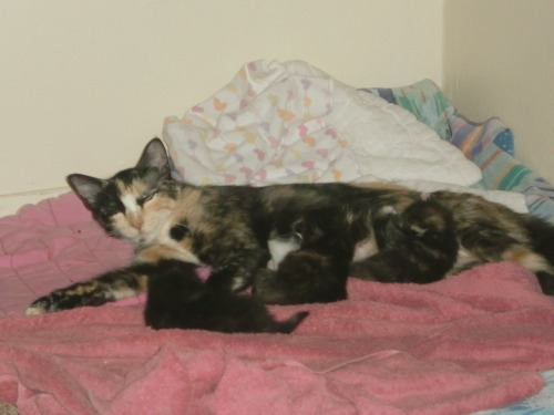theanonymousalien:  Momma cat sleeping with her hungry hungry babies. They're blinking so much! It's adorable.