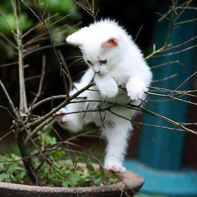 I climb my first tree.