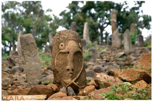 eastafricaart:  Recently repaired stele, Ethiopia. General view of stelae at Tuto Fela, a cemetery, under a layer of broken stones covering some 900 sq.m., and dating between 1000 AD -1300 AD. Source: Trust for African Rock Art (TARA)