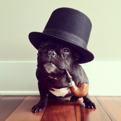 wellthatsadorable:  Winston Churchill has been cloned/reincarnated as an adorable dog. Hooray science/karma! (Thanks for the link, Amy! See more here)