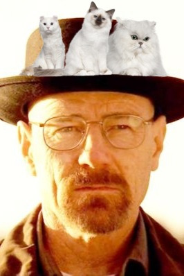 cats-in-places-they-shouldnt-be:  Walter White + cats