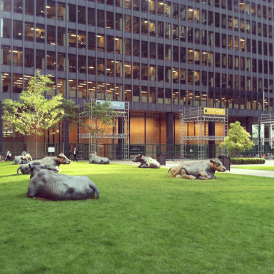 "jeffdtaylor:  Joe Fafard, ""The Pasture"", 1985 @ TD Financial Centre in Toronto (by Mies van der Rohe) (Photo: August 2012)"