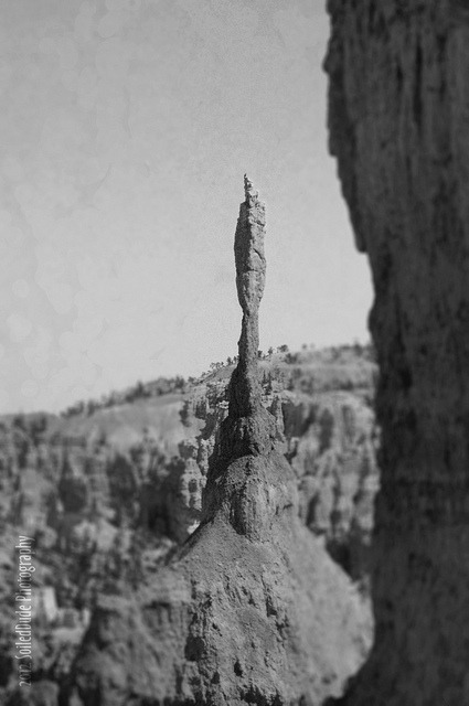 Zion Spire on Flickr.Taken during my trip into Bryce Canyon National Park… I'm not a decent landscape photographer, so I look at the multitudes of photos I took and really wonder if people would think them interesting. Here is one I played around with (originally in color).