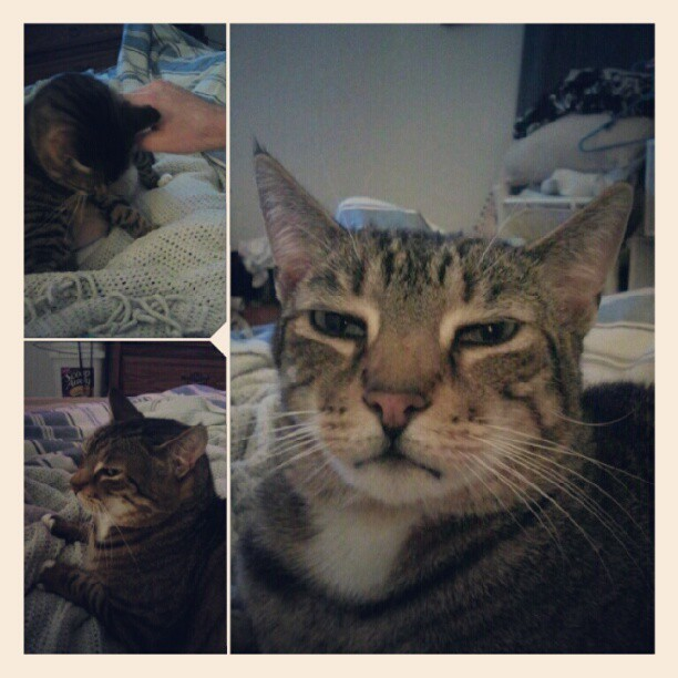 #kitty #cat #tiger #collage #photoshake  (Taken with Instagram at Ashley's house of  awesomeness)