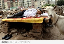 Photobomb LVL Goat from 9GAG by 9GAG Reader (9g.re)