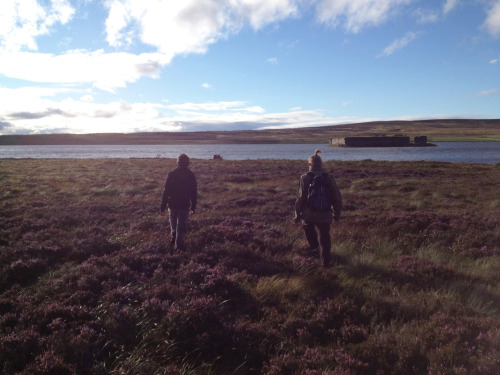 the purple heather is coming out on the hills