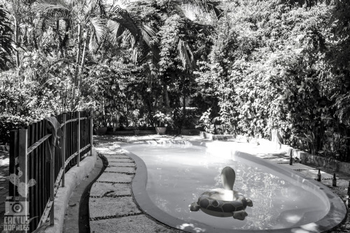 Pool de costa azul