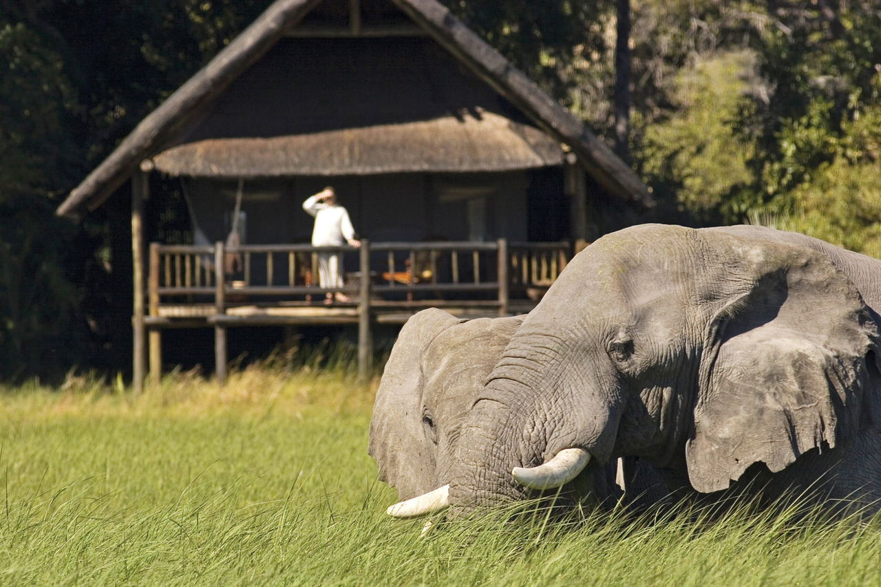 Seclude yourself within the Wildlife Reserve: Botswana