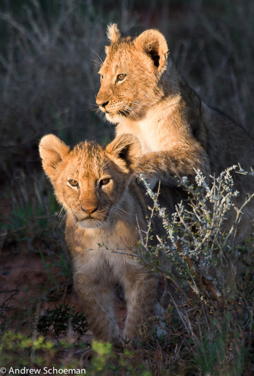 "magicalnaturetour:   ""Little Friends!"" by Andrew Schoeman:)"