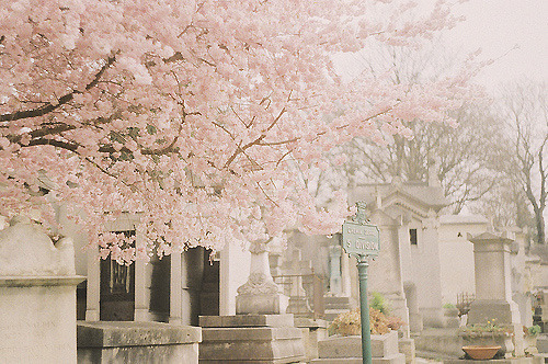 pink | Tumblr on We Heart It. http://weheartit.com/entry/35763059
