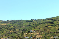 View of the Douro Valley, home of some of the most delicious wine in the world (Portugal).