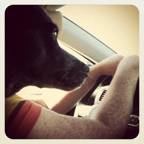 Jonesy's turn to drive (Taken with Instagram)