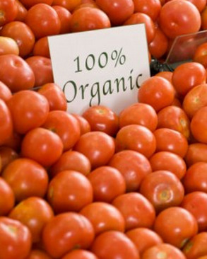 "According to a new study that looked at 40 years of research, organic food has no more nutritional value than non-organic food. Photo: ThinkStock/Polka Dot GOOD DAY FOR: Making it officialApple finally tells the world what many tech bloggers hinted at for months: The iPhone 5 will be revealed on Sept. 12. [Buzzfeed] Final requestsA futurist group raises $27,000 to help a terminally-ill cancer patient get cryogenically preserved after she dies. [Discovery News] Bureaucratic buttsFederal government agencies spent at least $497,494 on trendy ergonomic office chairs between 2005 and 2011. [The Daily] BAD DAY FOR: Vegetable elitistsScientists at Stanford find that foods labeled as organic provide no added nutritional value or health advantages. [Slate] The youth voteA Twitter search reveals that many teenagers don't know ""Obama's last name."" [Buzzfeed]  Salvaging what little credibility you have leftWriter Jonah Lehrer loses his blogger position at Wired after an investigation reveals that many of his posts contained plagiarism, false quotes and other inaccuracies. Lehrer was fired from The New Yorker recently over similar allegations. [New York]"