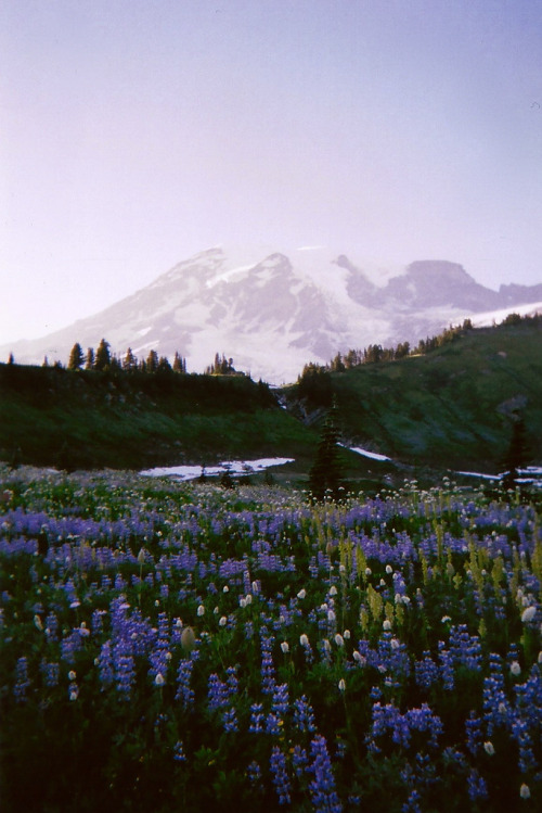 just-breezy:  Untitled | Rachael Schumacher