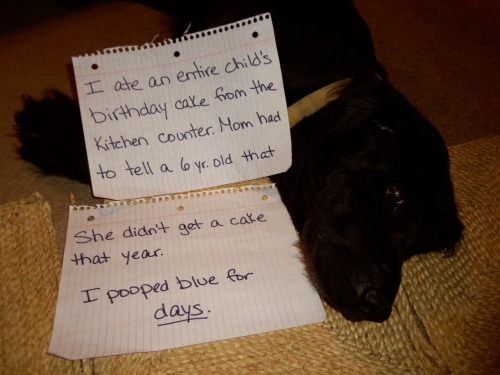 dogshaming:  Cole was very ashamed, but only after he got caught.