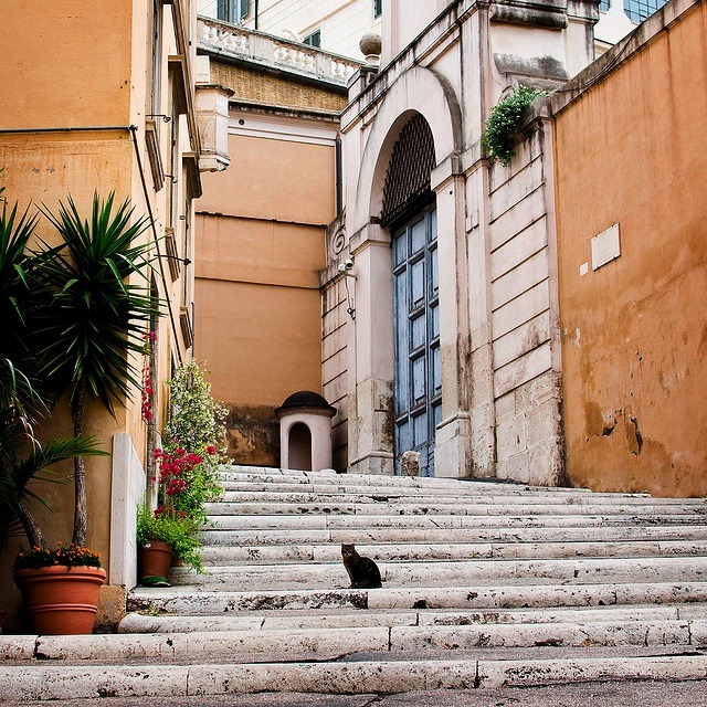 | ♕ |  gatto su scala - Rome  | by ©.natasha. | via ysvoice