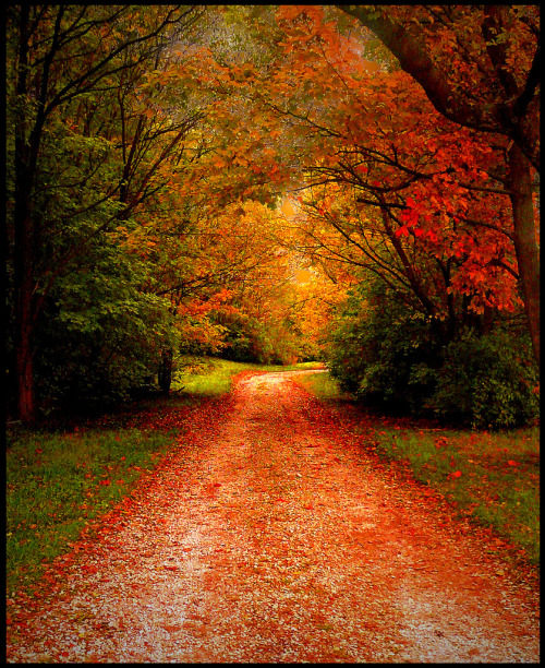 Our ever changing seasons, autumn in Indiana, (by Amy V. Miller)