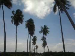 You gotta love Puerto Rico#amazing #Beach #Palms #beautiful #tree #CapturedMoment #photography #PuertoRico #breathtaking #streamzoo(from @Wilmylok on Streamzoo)